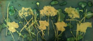 cyanotype agnes clairand